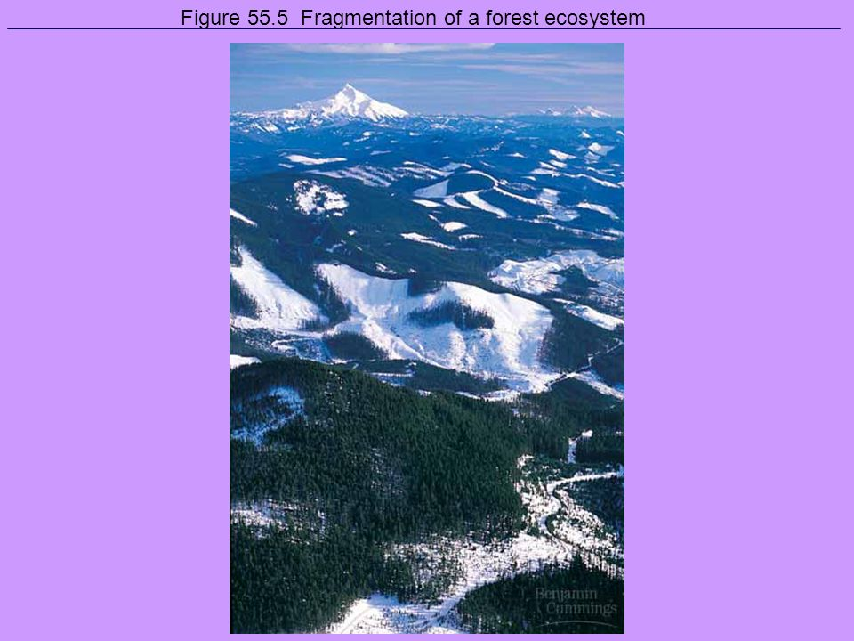 Figure 55.5 Fragmentation of a forest ecosystem
