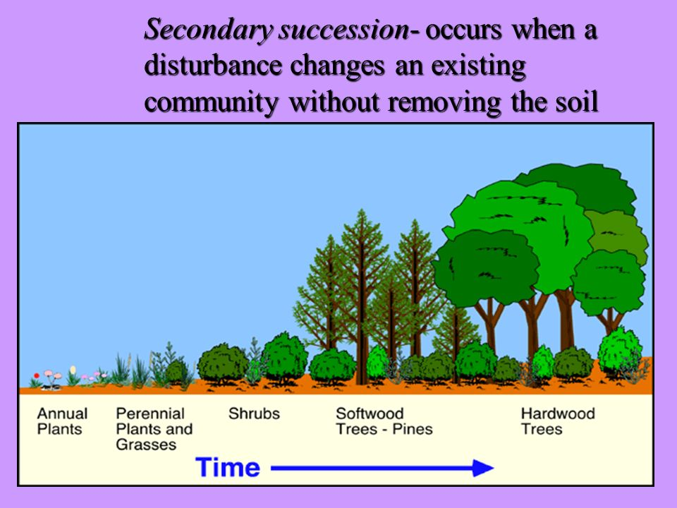 Secondary succession- occurs when a. disturbance changes an existing