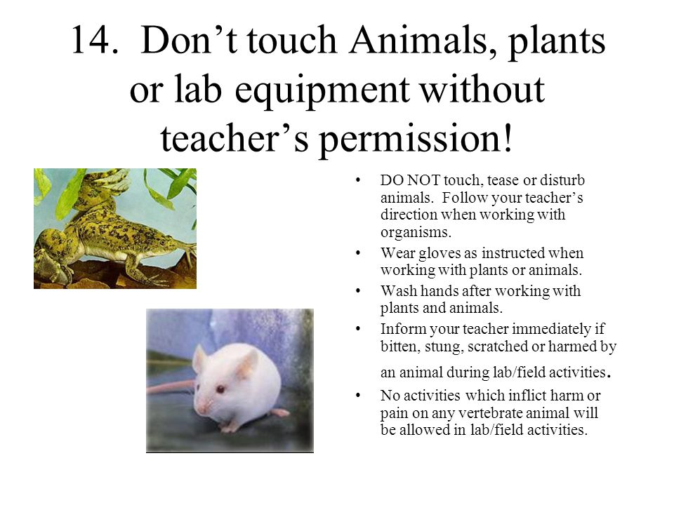 14. Don't touch Animals, plants or lab equipment without teacher's permission!