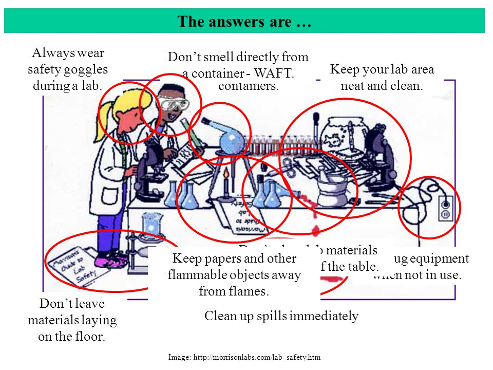 The answers are … Always wear safety goggles during a lab.