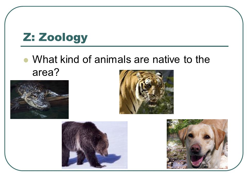 Z: Zoology What kind of animals are native to the area