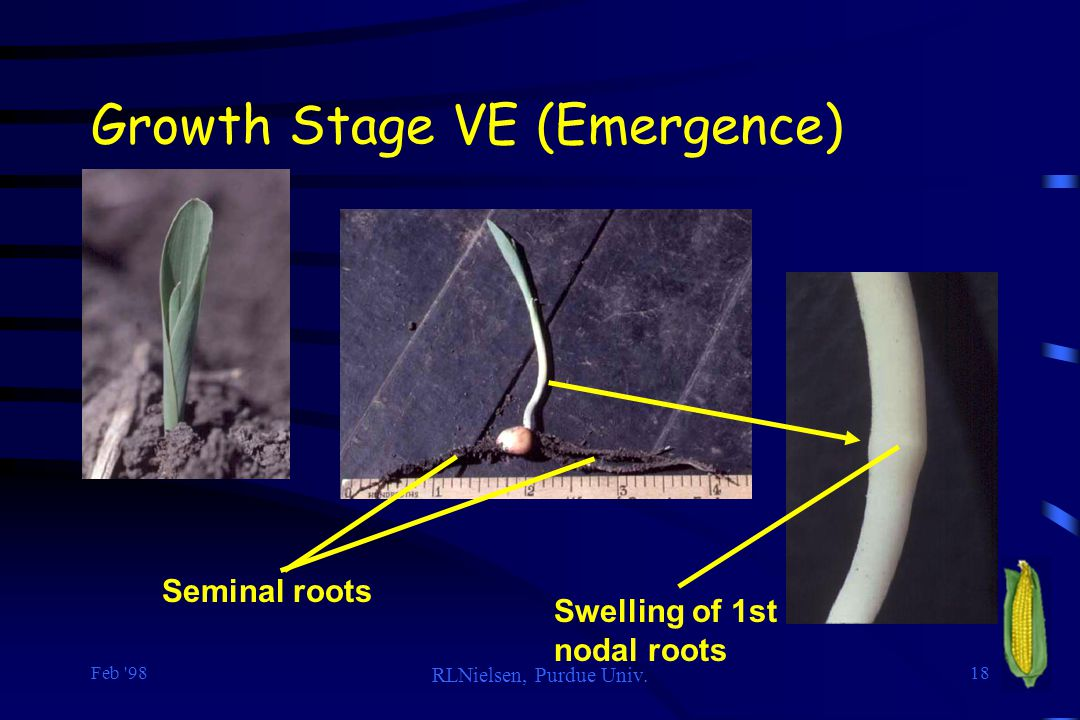 Growth Stage VE (Emergence)