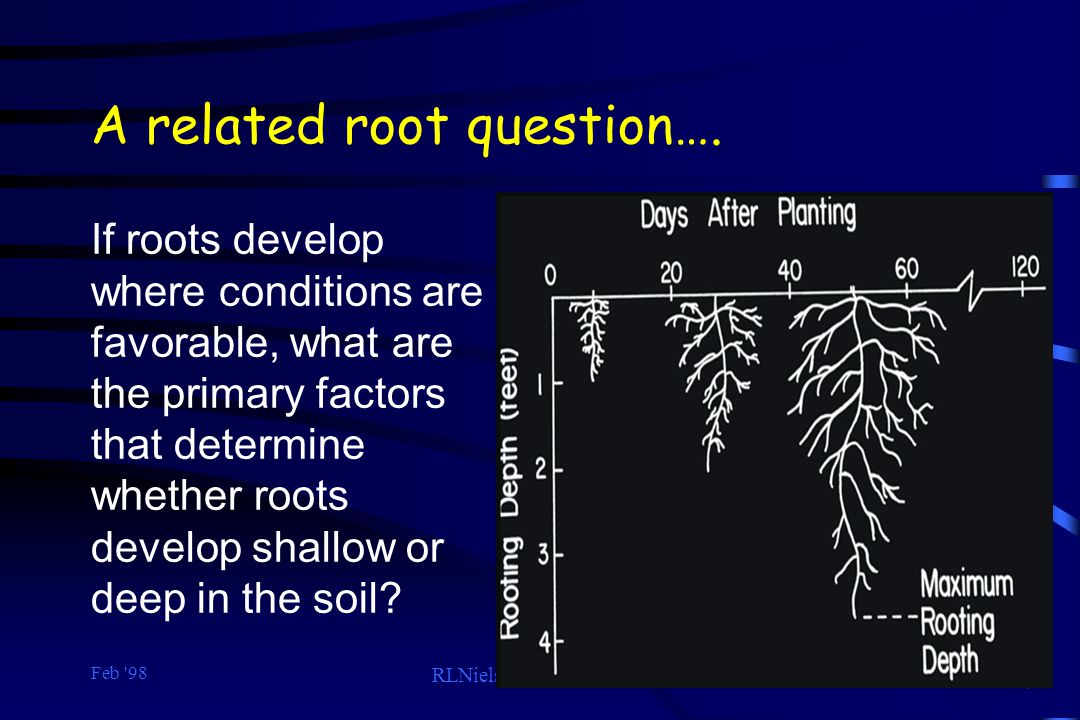 A related root question….
