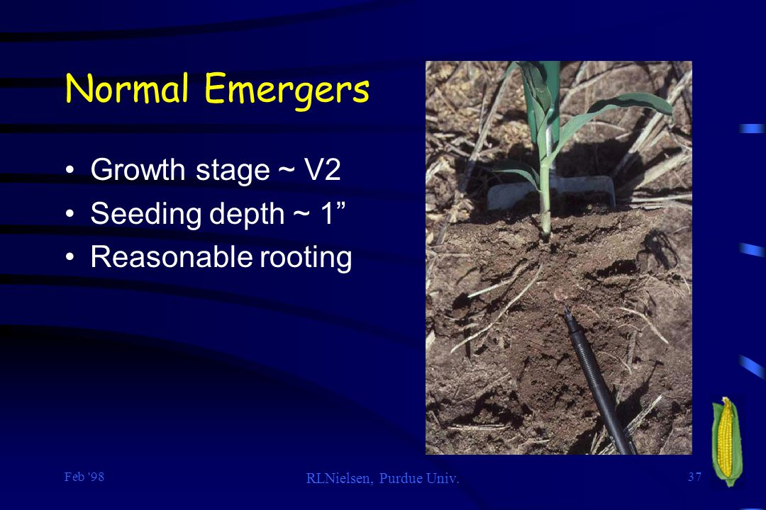 Normal Emergers Growth stage ~ V2 Seeding depth ~ 1