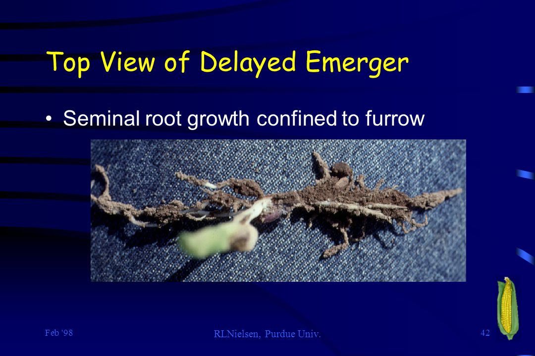 Top View of Delayed Emerger