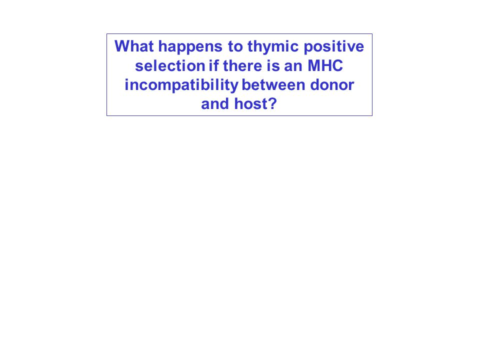 What happens to thymic positive selection if there is an MHC incompatibility between donor and host