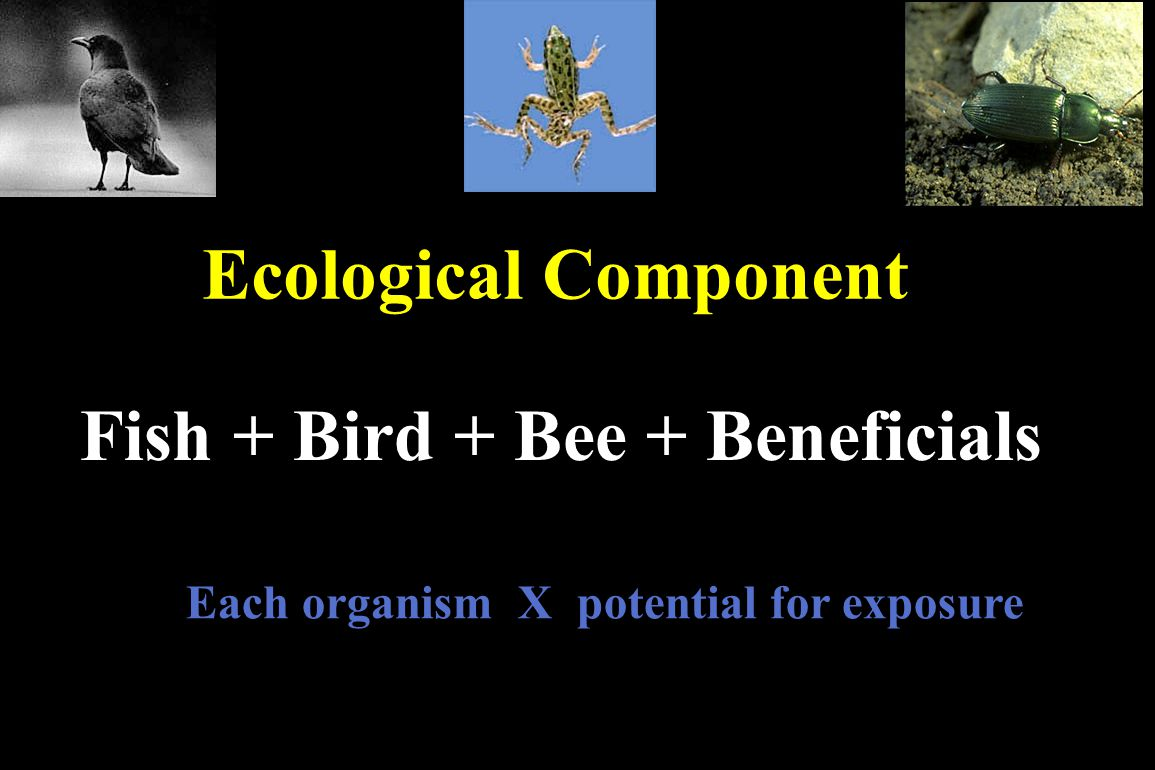 Fish + Bird + Bee + Beneficials
