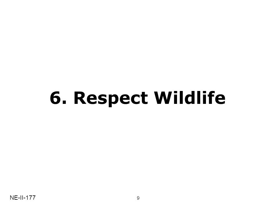 6. Respect Wildlife NE-II-177 9
