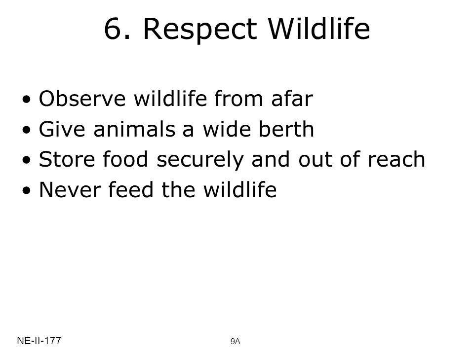 6. Respect Wildlife Observe wildlife from afar