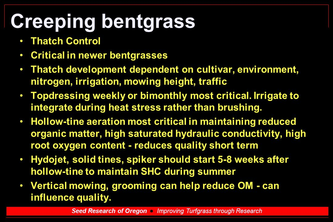 Creeping bentgrass Thatch Control Critical in newer bentgrasses