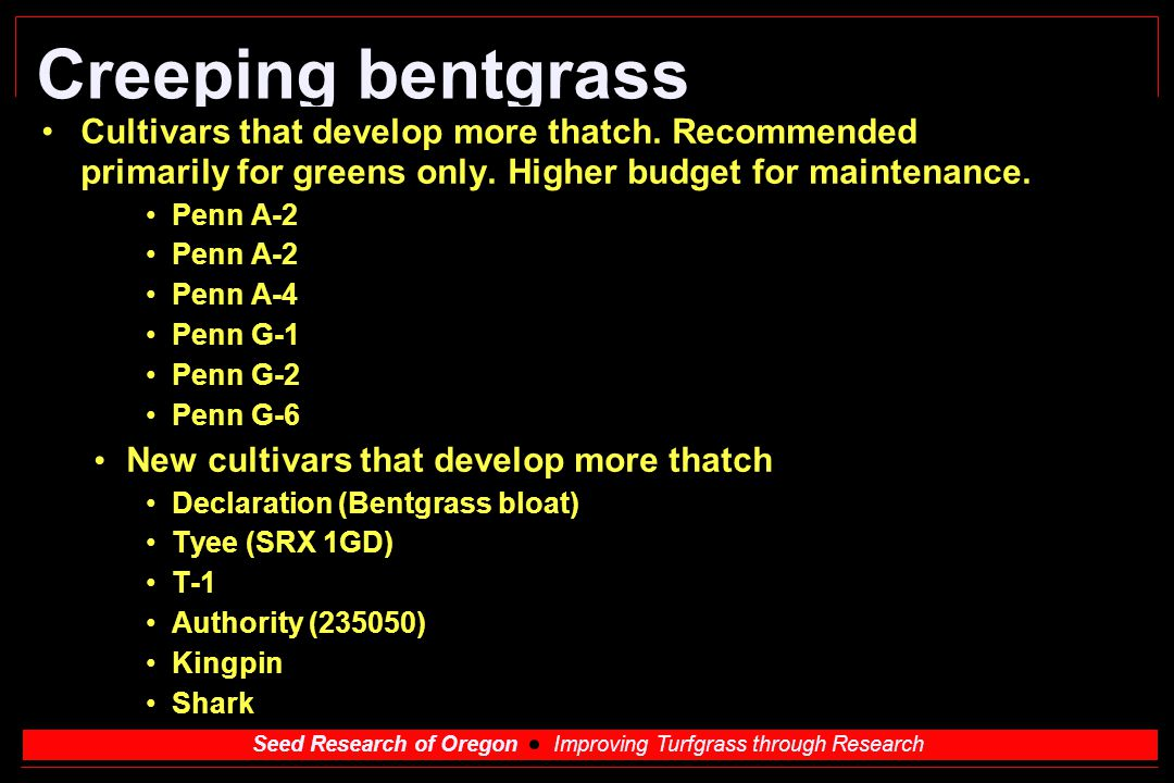 Creeping bentgrass Cultivars that develop more thatch. Recommended primarily for greens only. Higher budget for maintenance.