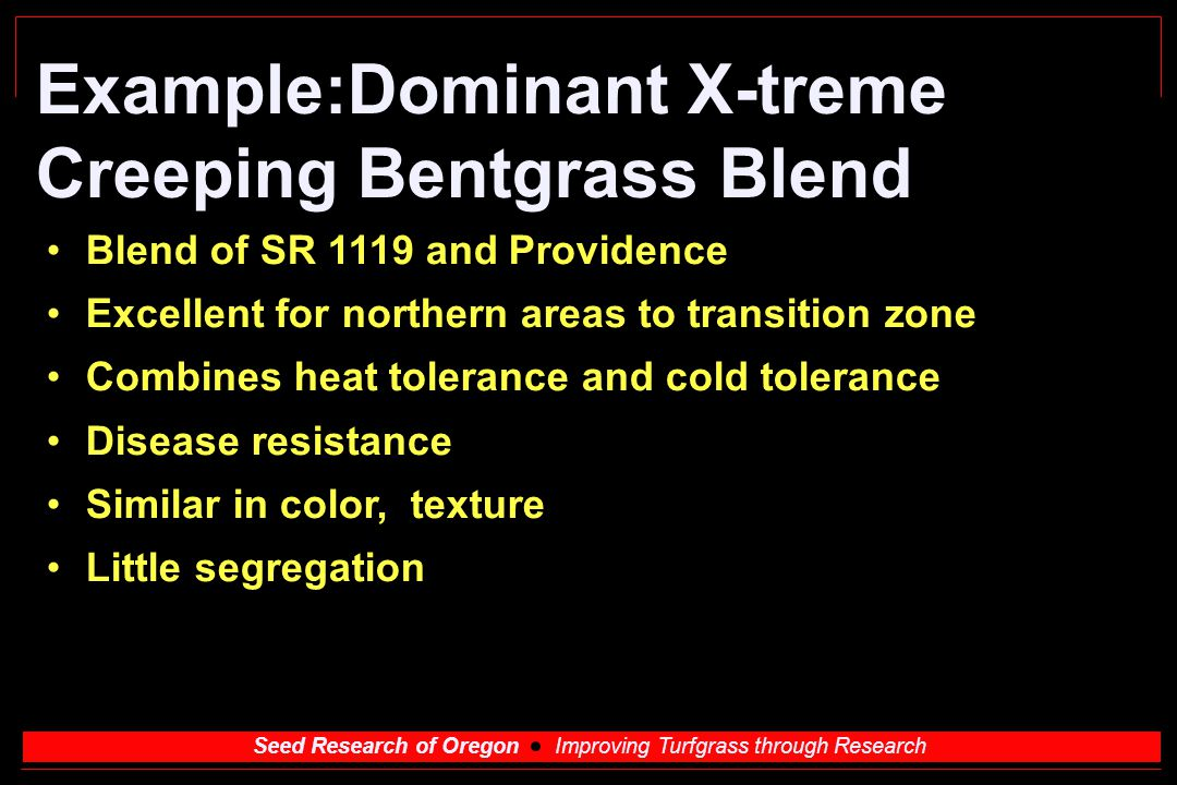 Example:Dominant X-treme Creeping Bentgrass Blend