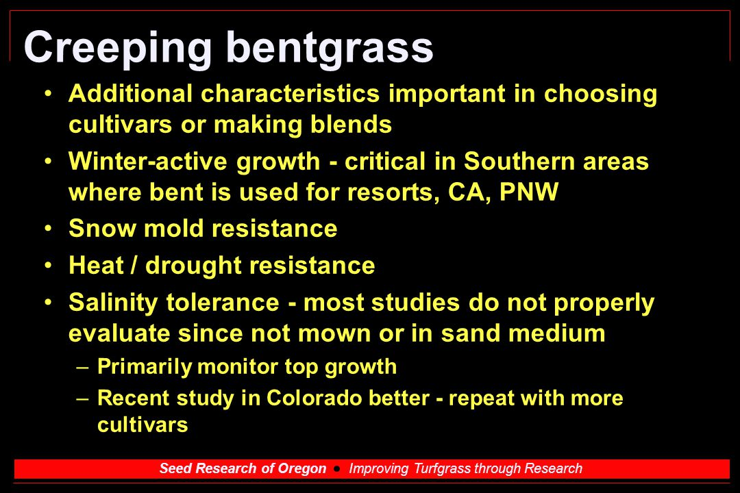 Creeping bentgrass Additional characteristics important in choosing cultivars or making blends.