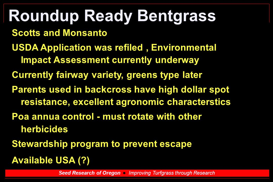 Roundup Ready Bentgrass