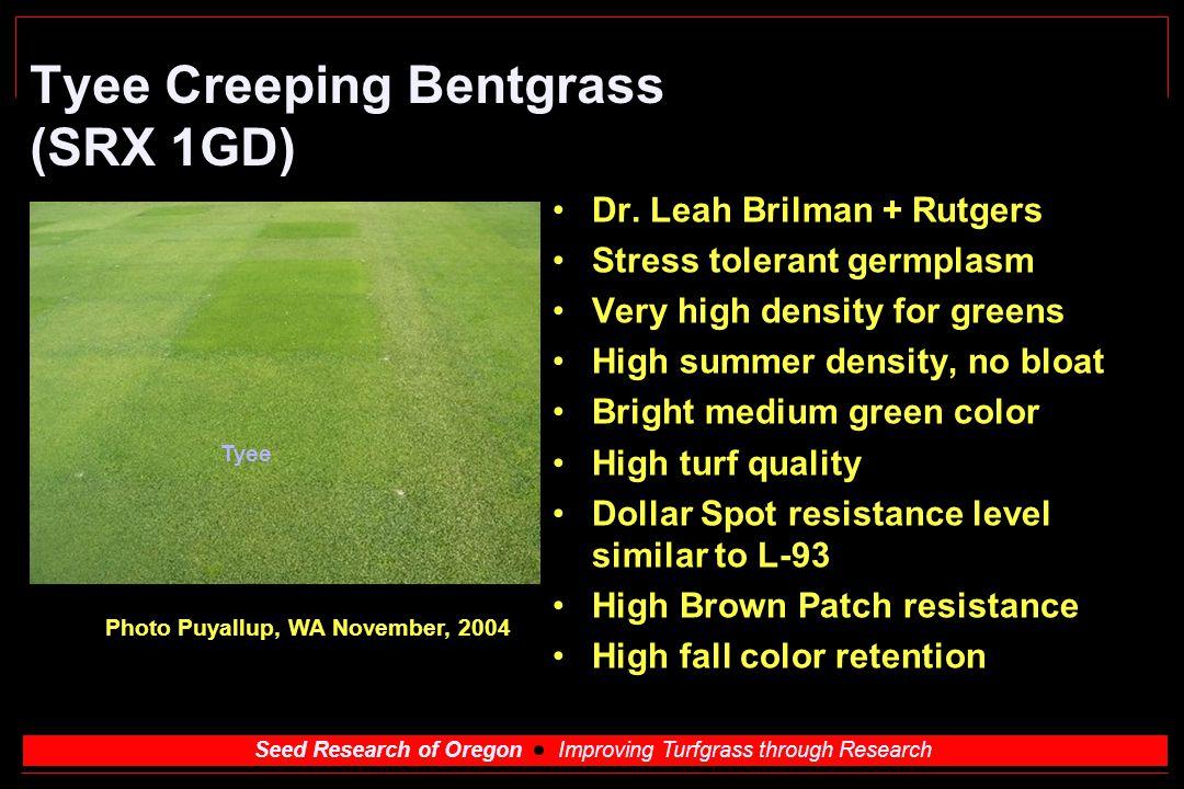 Tyee Creeping Bentgrass (SRX 1GD)
