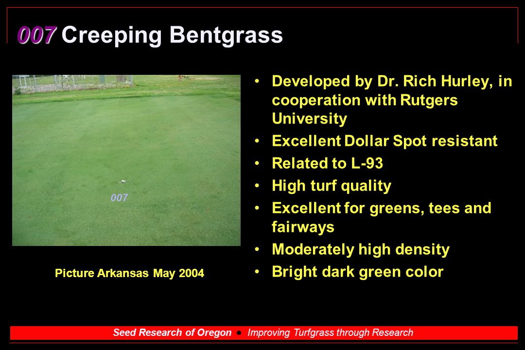 007 Creeping Bentgrass Developed by Dr. Rich Hurley, in cooperation with Rutgers University. Excellent Dollar Spot resistant.
