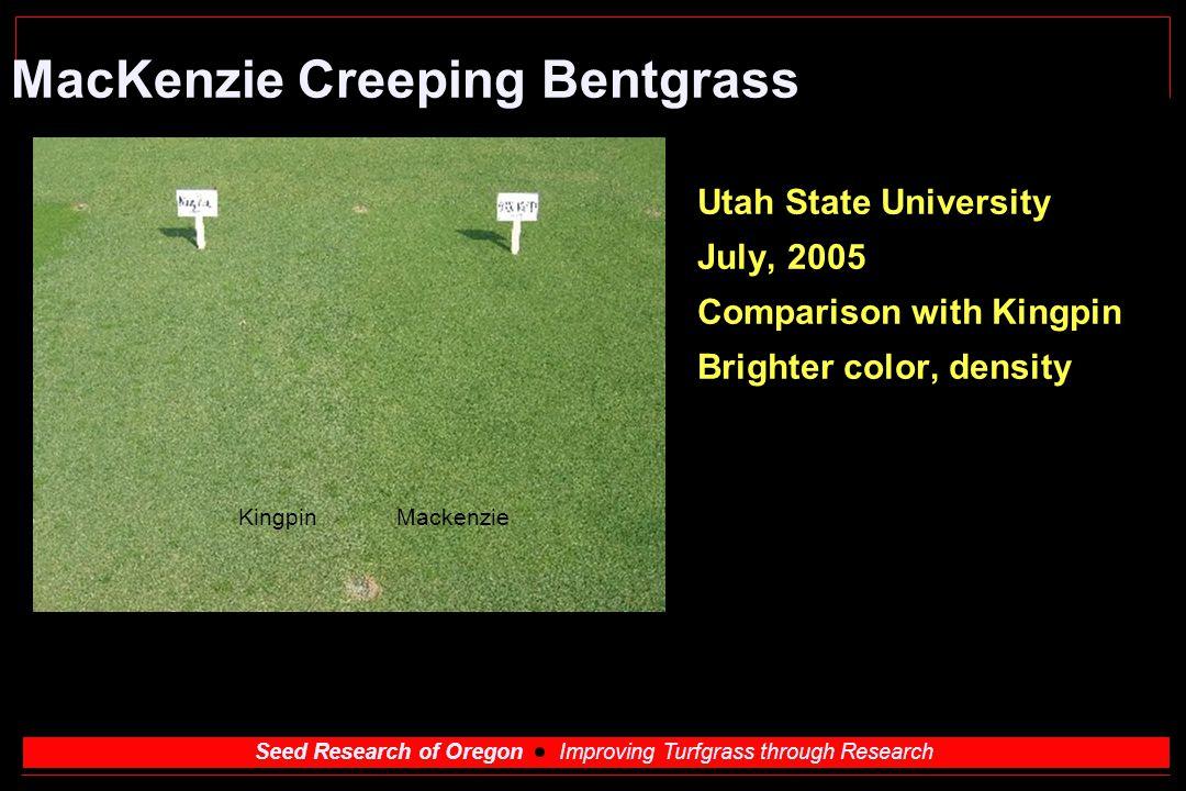 MacKenzie Creeping Bentgrass
