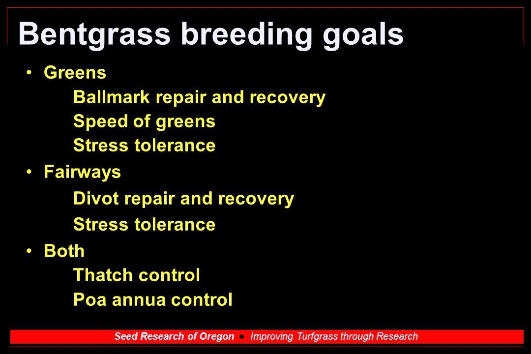Bentgrass breeding goals