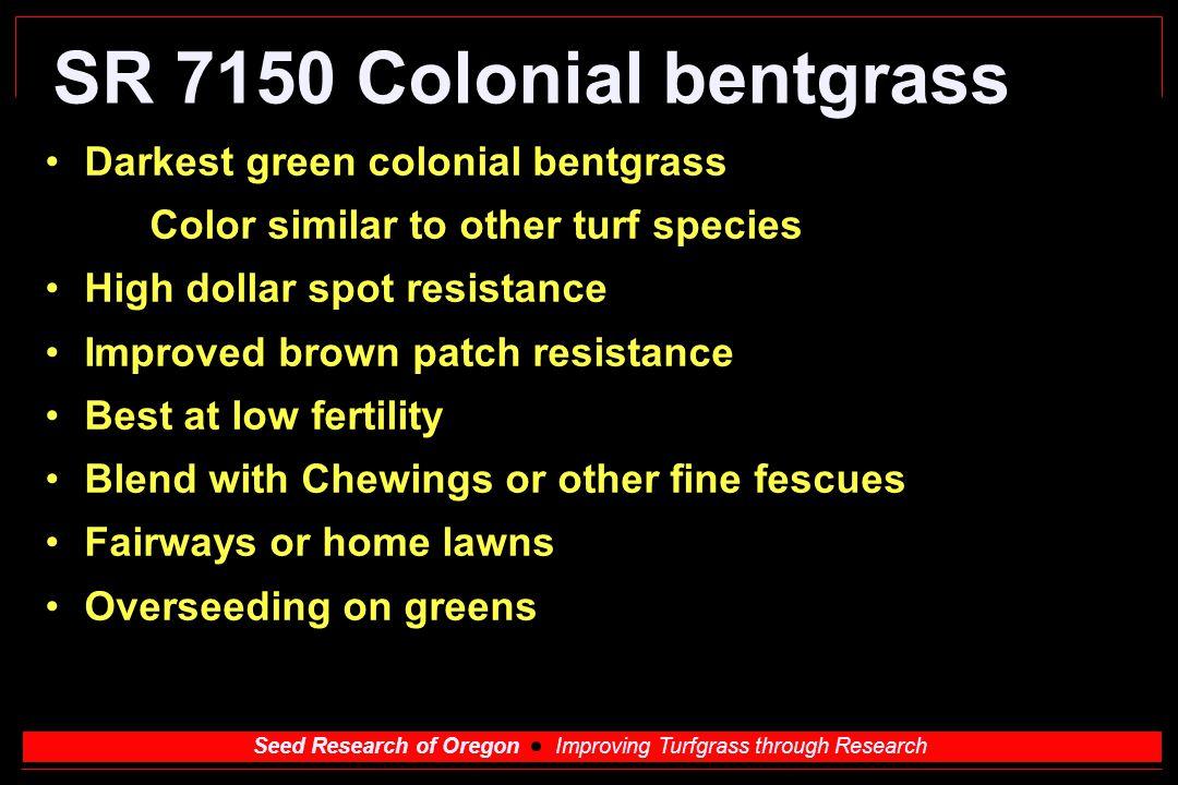 SR 7150 Colonial bentgrass Darkest green colonial bentgrass