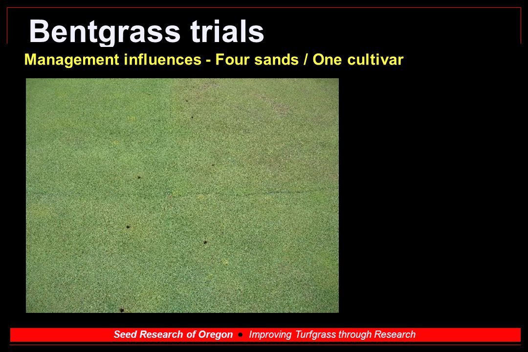 Bentgrass trials Management influences - Four sands / One cultivar