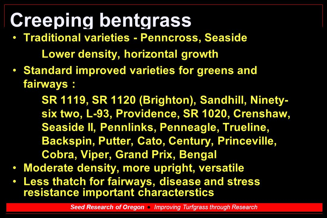 Creeping bentgrass Traditional varieties - Penncross, Seaside