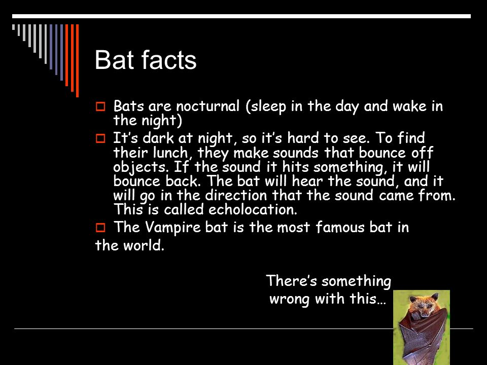 Bat facts Bats are nocturnal (sleep in the day and wake in the night)