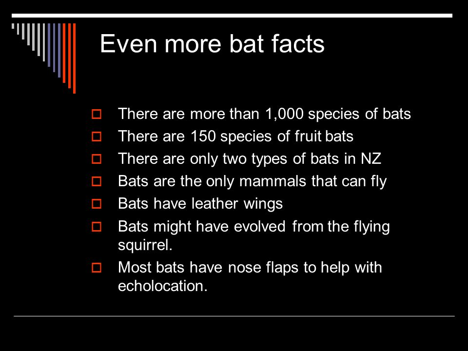 Even more bat facts There are more than 1,000 species of bats