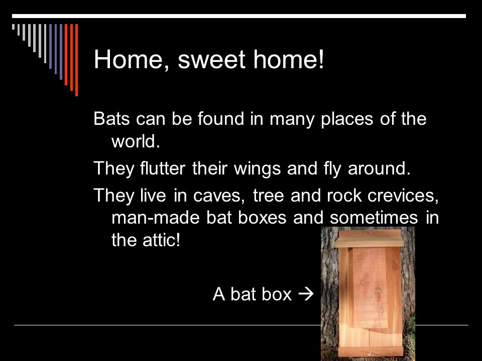 Home, sweet home! Bats can be found in many places of the world.