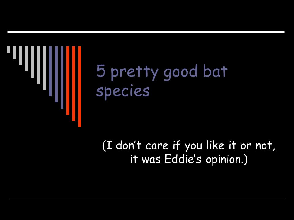 5 pretty good bat species
