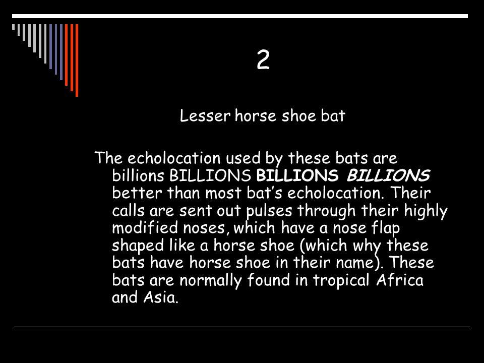 2 Lesser horse shoe bat.