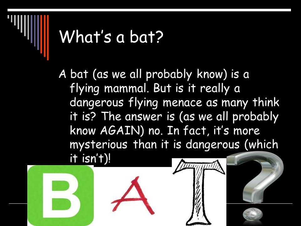 What's a bat