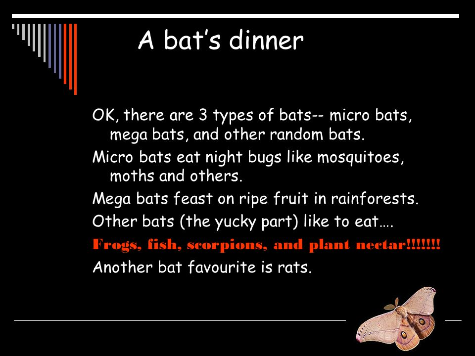 A bat's dinner OK, there are 3 types of bats-- micro bats, mega bats, and other random bats.