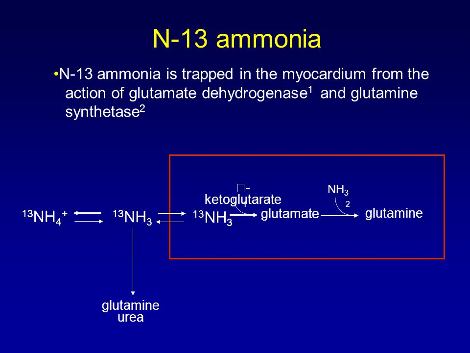 N-13 ammonia •N-13 ammonia is trapped in the myocardium from the action of glutamate dehydrogenase1 and glutamine synthetase2.