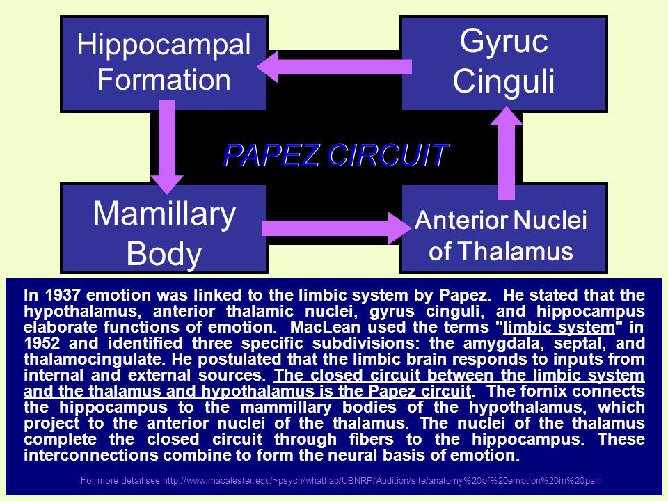 Anterior Nuclei of Thalamus