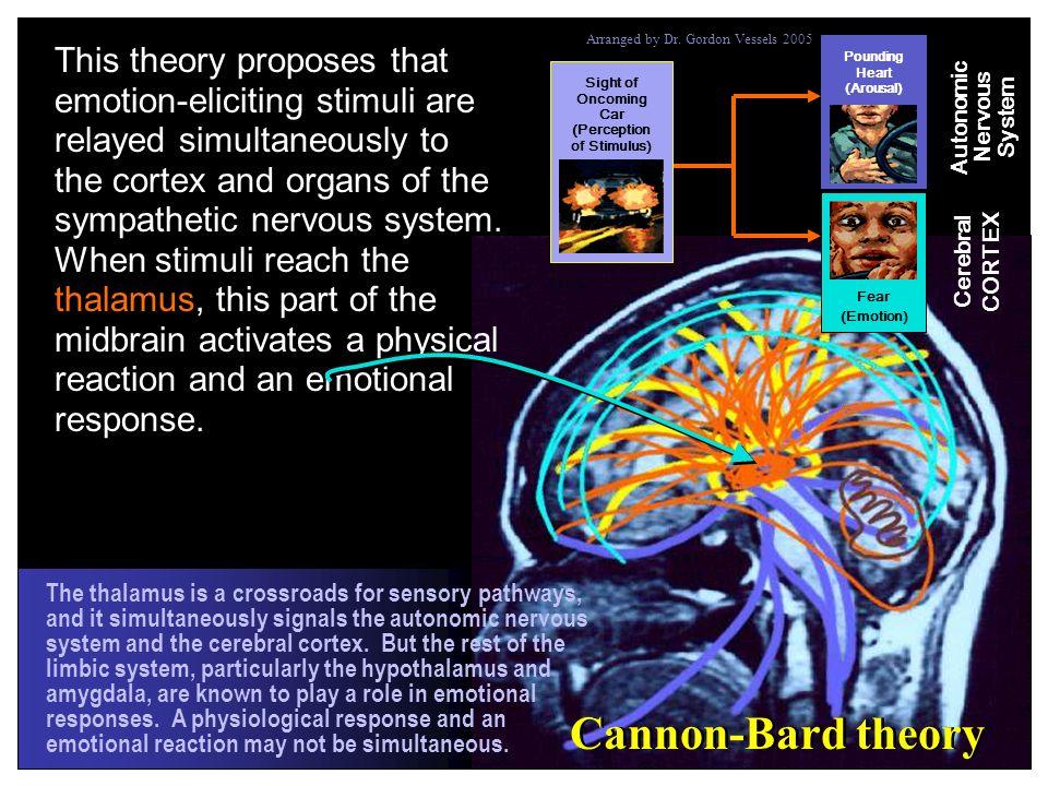 (Perception of Stimulus) Autonomic Nervous System