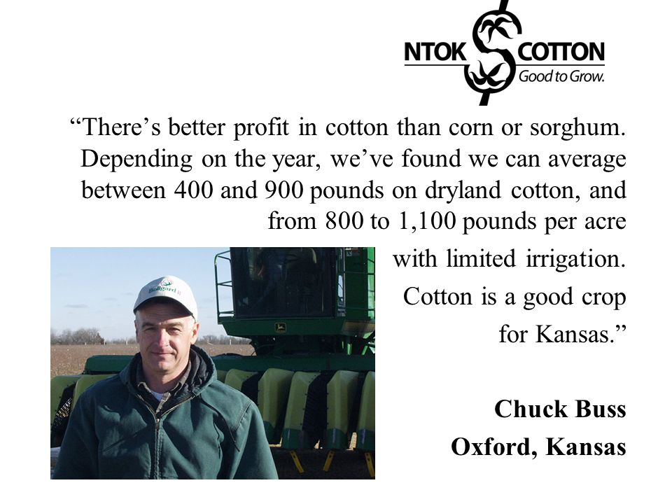 There's better profit in cotton than corn or sorghum