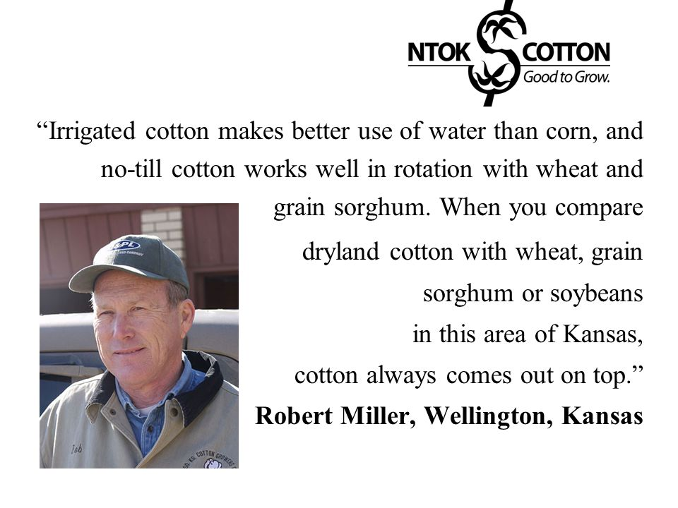 Irrigated cotton makes better use of water than corn, and no-till cotton works well in rotation with wheat and grain sorghum. When you compare