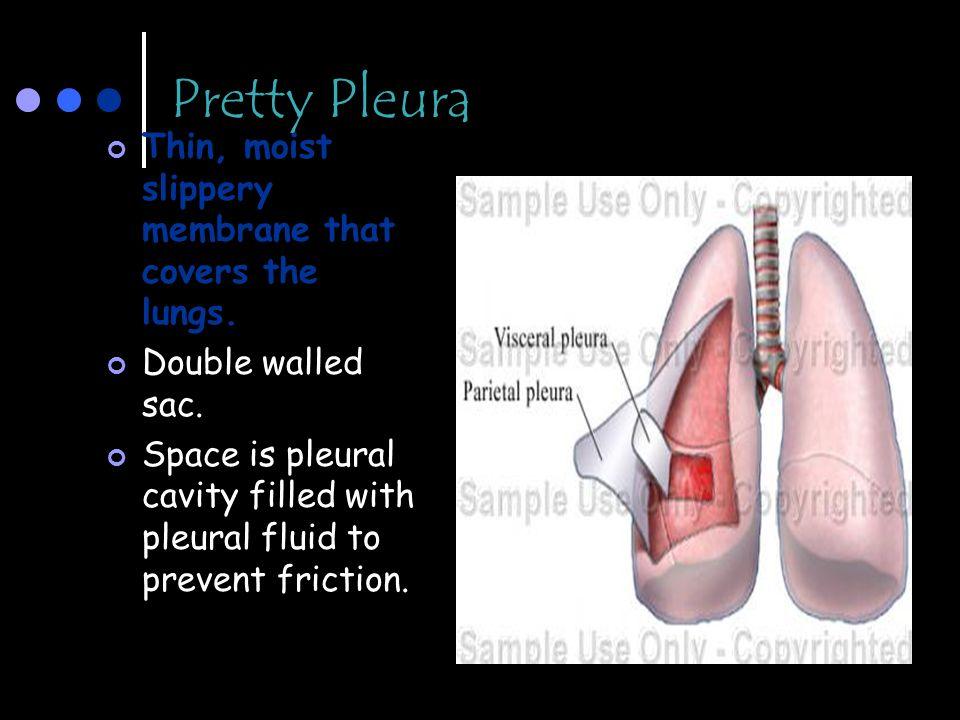 Pretty Pleura Thin, moist slippery membrane that covers the lungs.