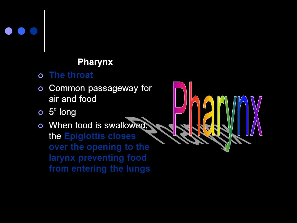 Pharynx Pharynx The throat Common passageway for air and food 5 long
