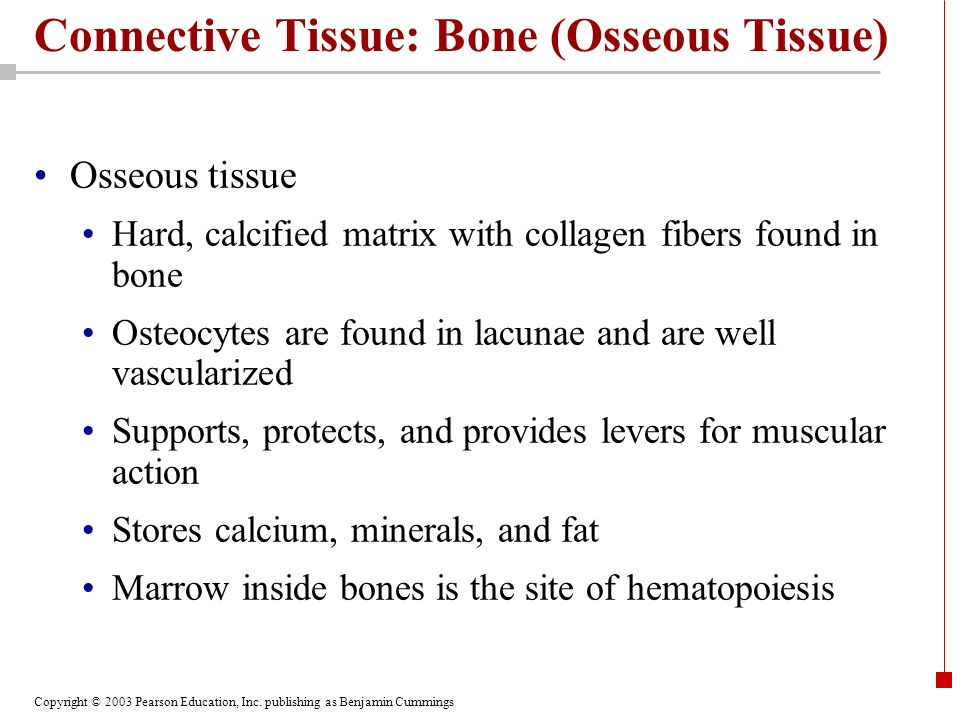 Connective Tissue: Bone (Osseous Tissue)