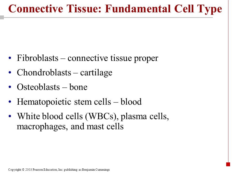 Connective Tissue: Fundamental Cell Type