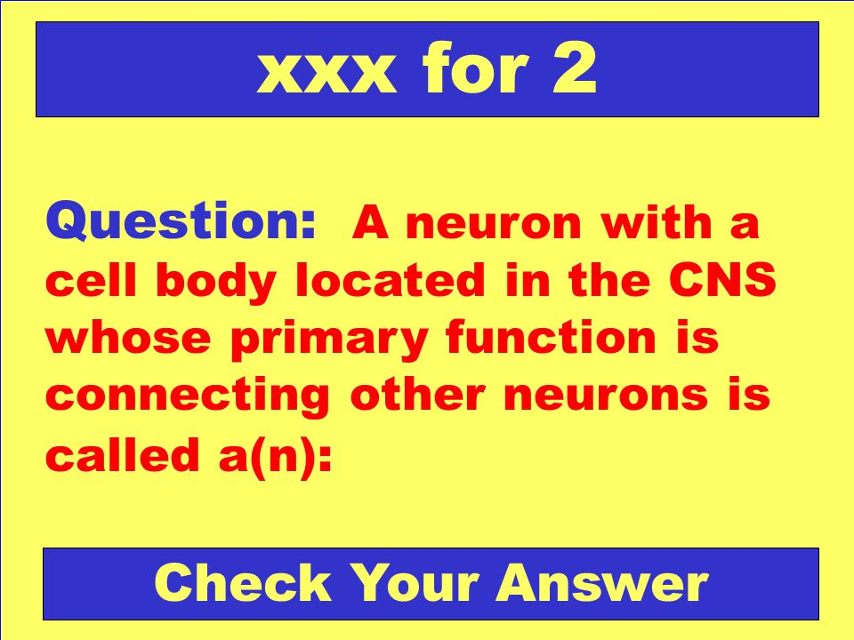 xxx for 2 Question: A neuron with a cell body located in the CNS whose primary function is connecting other neurons is called a(n):