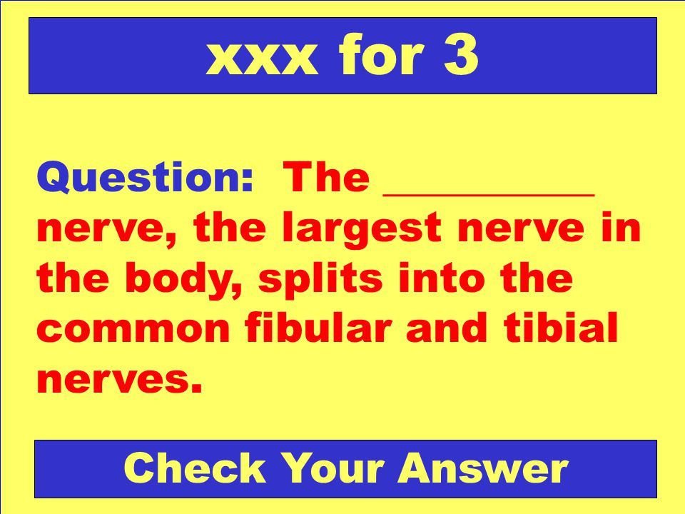 xxx for 3 Question: The __________ nerve, the largest nerve in the body, splits into the common fibular and tibial nerves.