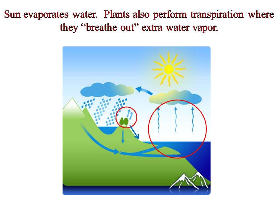Sun evaporates water. Plants also perform transpiration where they breathe out extra water vapor.
