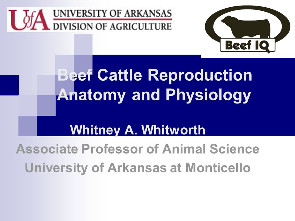 Beef Cattle Reproduction Anatomy and Physiology - ppt video online ...