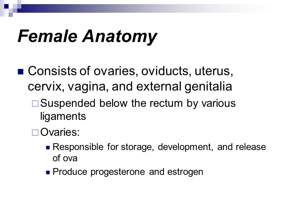 Female Anatomy Consists of ovaries, oviducts, uterus, cervix, vagina, and external genitalia. Suspended below the rectum by various ligaments.