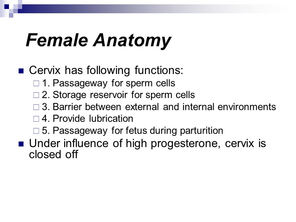 Female Anatomy Cervix has following functions: