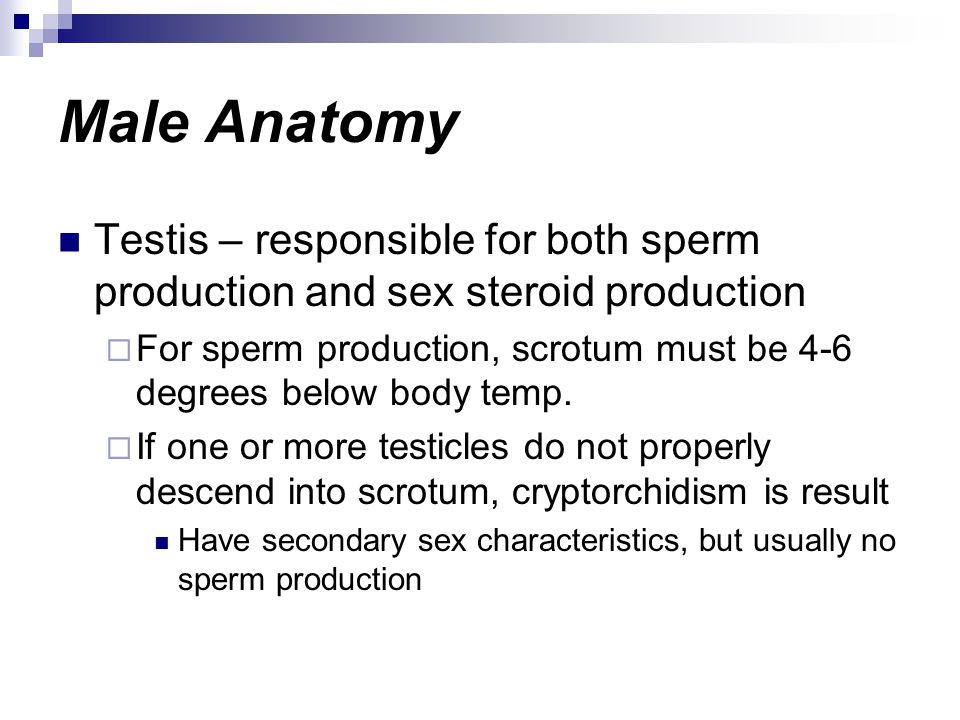 Male Anatomy Testis – responsible for both sperm production and sex steroid production.