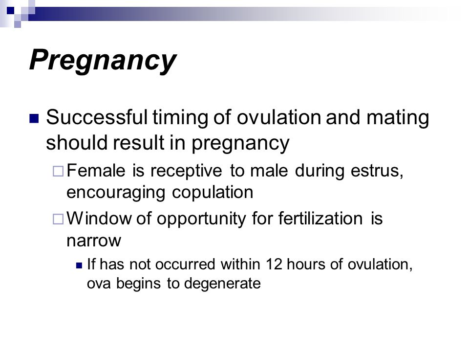 Pregnancy Successful timing of ovulation and mating should result in pregnancy. Female is receptive to male during estrus, encouraging copulation.