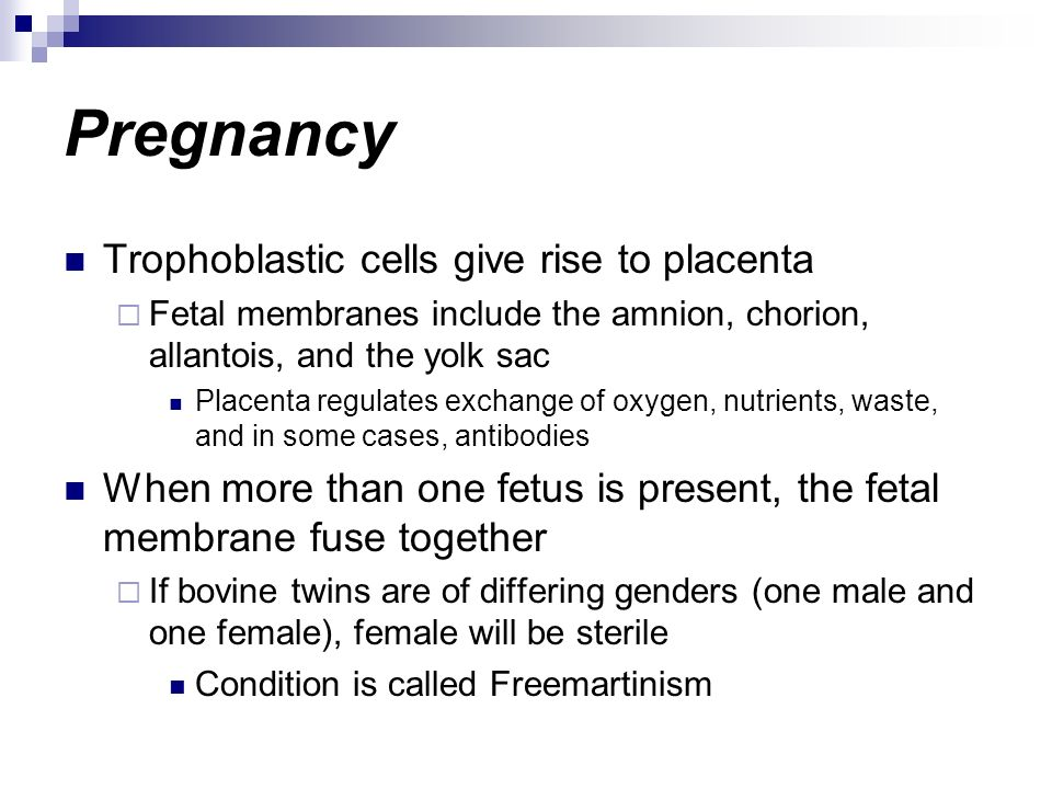 Pregnancy Trophoblastic cells give rise to placenta